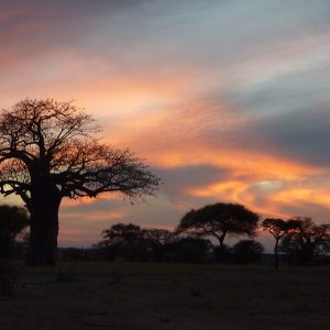 African Safari: Sunset in Tanzania
