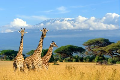 Travel Tips for Kenya & Tanzania