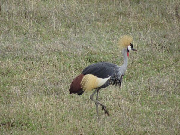 Kenya Tanzania - Bird