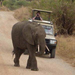 African Safari: Pop up safari vehicle